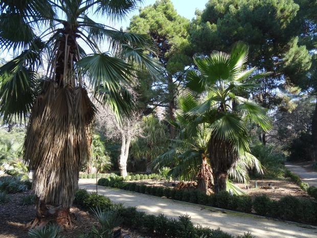 madrid jardin botanique jardin botanico